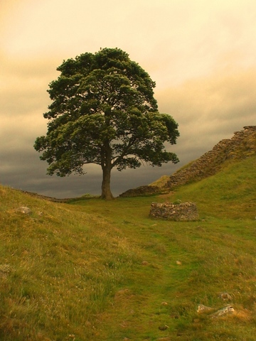 Robin Hood Tree, Hadrian's Wall. Take time to discover new things. From Top 10 tips for keeping your energy up while traveling