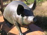 Pig sculpture, Meijer Gardens