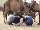 Men and Camels, Turkmenistan